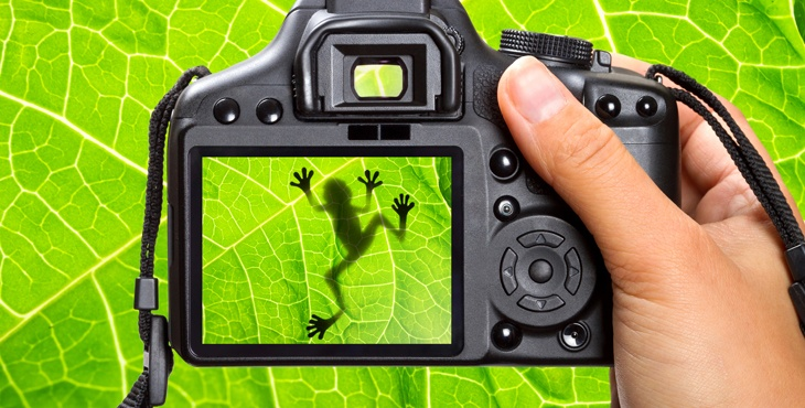 5 Simple Macro Photography Tips and Ideas