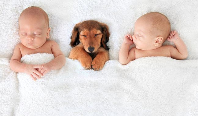 Babies Sleeping with a Family Pet